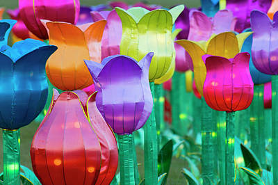 Photograph - Chinese Tulips by David Stasiak