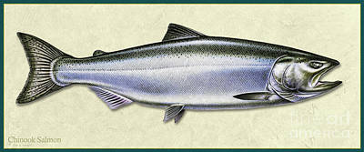 Painting - Chinook Salmon Id by Jon Q Wright