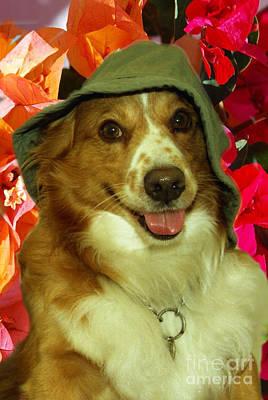 Funny Dog Digital Art - Chip And Hats 1 by Silvia  Duran