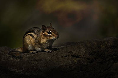 Print featuring the photograph Chipmunk On Rock by Michael Cummings