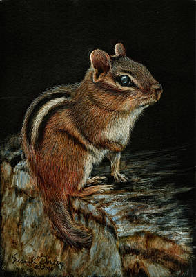 Drawing - Chipmunk On Stone Wall by Susan Donley