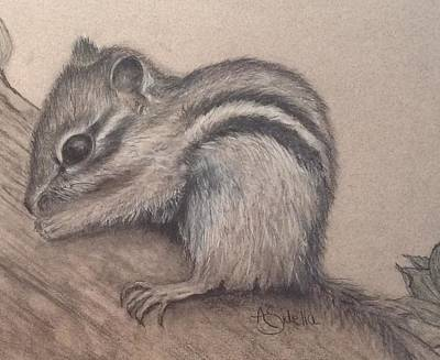 Drawing - Chipmunk, Tn Wildlife Series by Annamarie Sidella-Felts