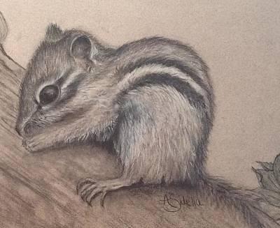 Drawing - Chipmunk, Tn Wildlife Series by Annamarie Sidella-Felts