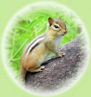 Photograph - Chipmunk World by MTBobbins Photography