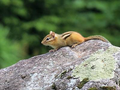 Photograph - Chipmunk's Mountain by MTBobbins Photography