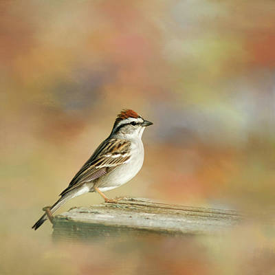 Photograph - Chipping Sparrow by Cindi Ressler