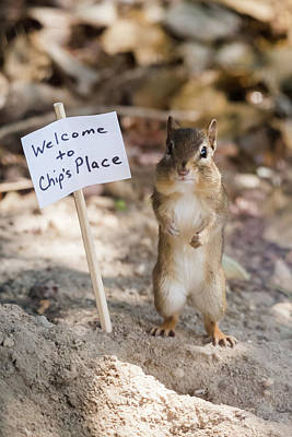Photograph - Chip's Place by Terry DeLuco