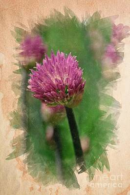 Photograph - Chive Blossoms In June by Mary Machare