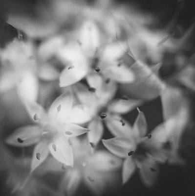 Chives Photograph - Chive Iv by Chris Dale