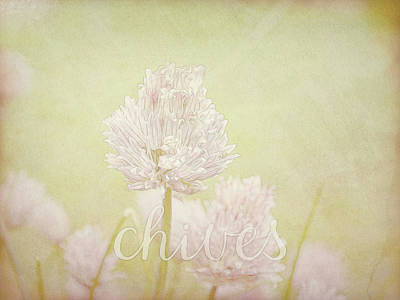 Photograph - Chives by Ann Powell