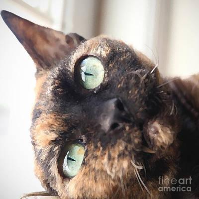 Devon Rex Cat Painting - Chloe by Glennis Siverson