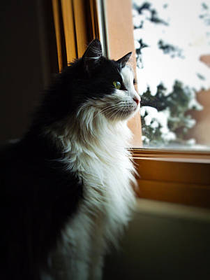 Chloe In Winter Window Art Print by Paul Cutright