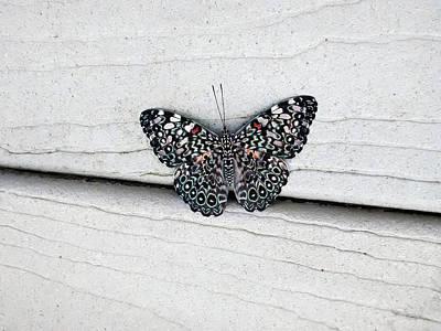 Photograph - Chloe's Cracker Butterfly by Marilyn Hunt
