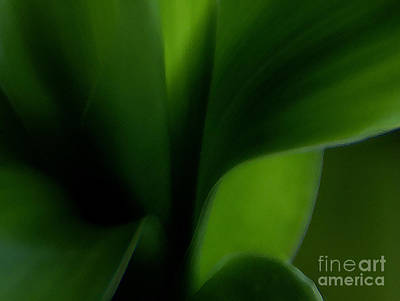 Houseplant Digital Art - Chlorophylls Selectivity by Linda Shafer