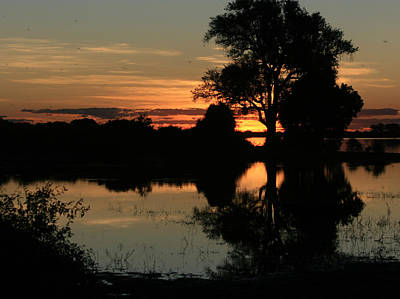 Photograph - Chobe River Sunset by Karen Zuk Rosenblatt