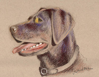 Chocolate Lab Drawing - Chocolate Lab by John Crowther