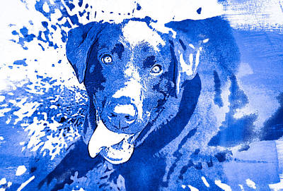 Photograph - Chocolate Lab - Wcblue by Joye Ardyn Durham