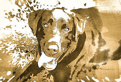 Photograph - Chocolate Lab - Wcbrown by Joye Ardyn Durham