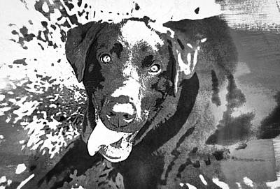 Photograph - Chocolate Lab - Wcbw by Joye Ardyn Durham