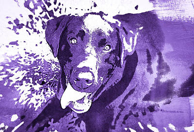 Photograph - Chocolate Lab - Wcpurple by Joye Ardyn Durham