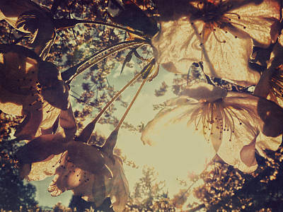 Photograph - Chocolate Sunshine by Connie Handscomb