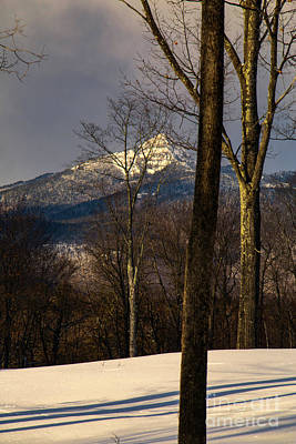 Photograph - Chocorua Through The Trees by Mim White