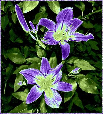 Digital Art - Choice Purple Lilies by Will Borden