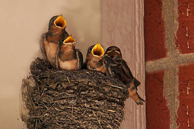 Baby Bird Photograph - Choir Practice by Mark Alder
