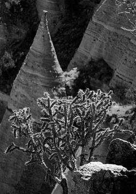 Cholla And Hoodoo Art Print by Jane Selverstone