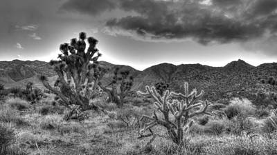 Photograph - Cholla And Joshua by Robert Melvin