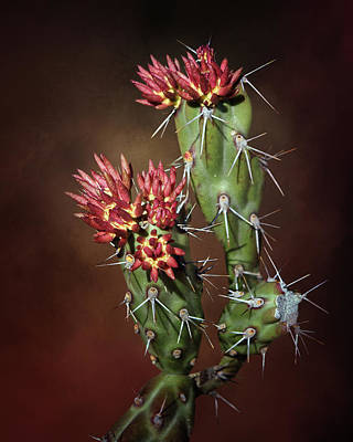 Photograph - Cholla Buds by Nikolyn McDonald