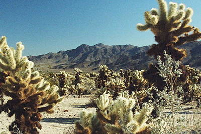 Photograph - Cholla Cacti by Frank Townsley