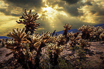 Art Print featuring the photograph Cholla Cactus Garden Bathed In Sunlight In Joshua Tree National Park by Randall Nyhof