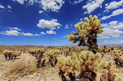 Target Threshold Nature - Cholla Cactus Garden in Joshua Tree National Park by Chon Kit Leong