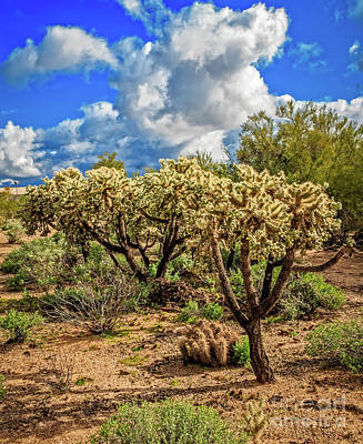 Photograph - Cholla Cactus by Robert Bales