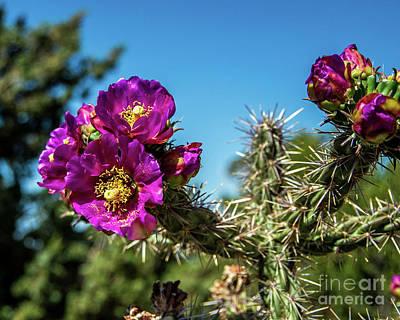 Photograph - Cholla Cactus by Stephen Whalen