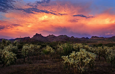 Photograph - Cholla Cactus Sunset Splendor by Dave Dilli