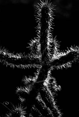 Photograph - Cholla by Catherine Sobredo