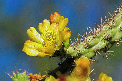 Photograph - Cholla Flower Op41 by Mark Myhaver