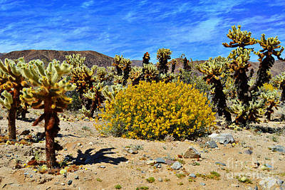 Photograph - Cholla Garden Of Joshua Tree National Park by Glenn McCarthy Art and Photography