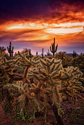 Photograph - Cholla Glow Sunset  by Saija Lehtonen