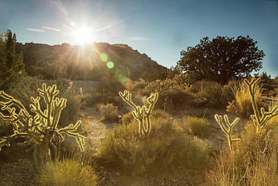 Photograph - Cholla Sunset by Kunal Mehra