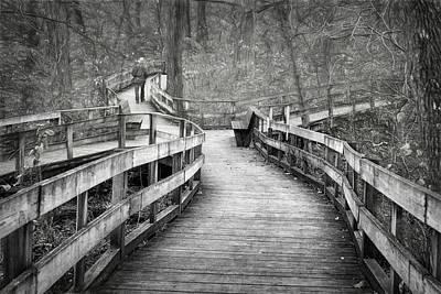 Photograph - Chosen Path by Nikolyn McDonald