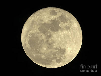 Photograph - Christmas 2015 Full Moon by D Hackett