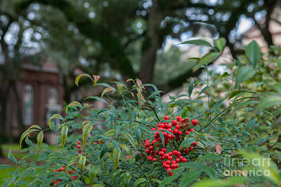 Photograph - Christmas At College Of Charleston by Dale Powell