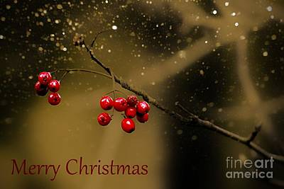 Photograph - Christmas Berries by Clare Bevan