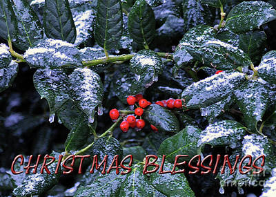Photograph - Christmas Blessings No.2 by Lydia Holly