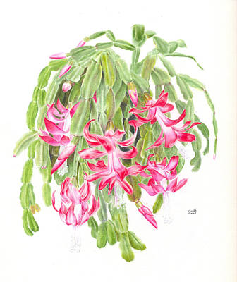 Painting - Christmas Cactus by Penrith Goff