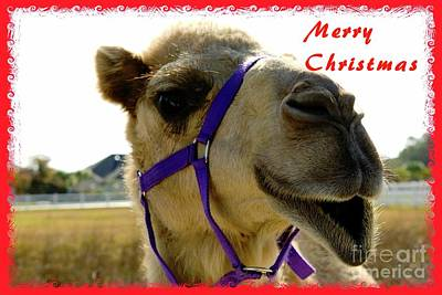 Mixed Media - Christmas Camel by Bob Pardue