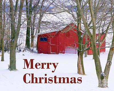 Photograph - Christmas Card  by Rachel Munoz Striggow